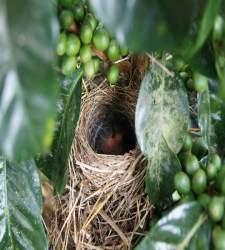 Our Blend Coffee from Nariño