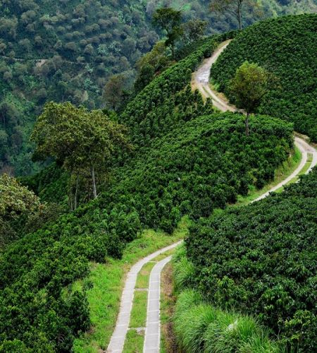 COFFEE Specialty Single Origin